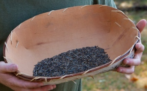 HainesA wild rice in tray cropped